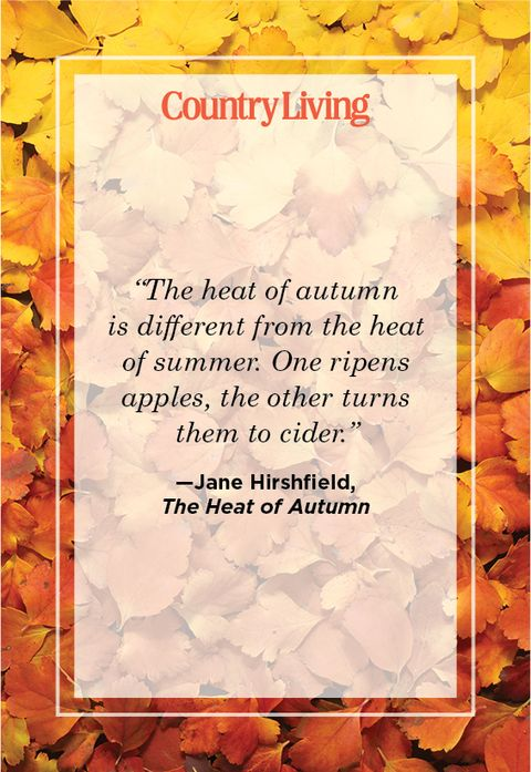 quote from the heat of autumn by jan hirshfield