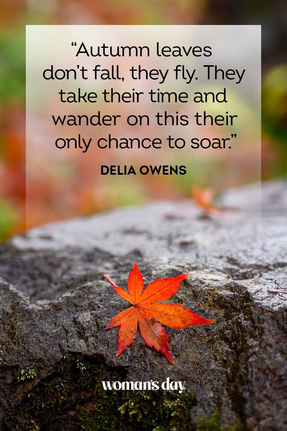 50 Best Fall Quotes 2021 - Inspirational Sayings and Phrases About Autumn