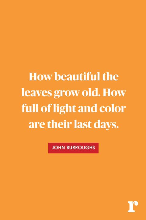Fall Quotes Awesome 48 Fall Quotes Quotes About Fall
