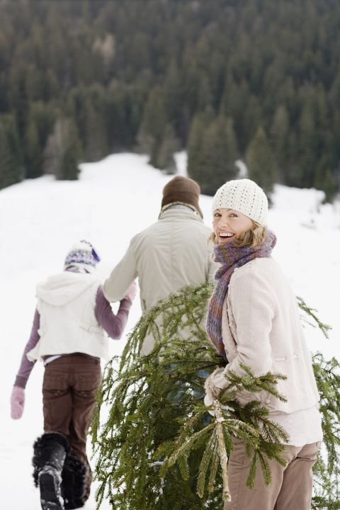 Family carrying Christmas tree through snow