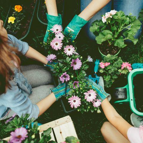 gardening classes online