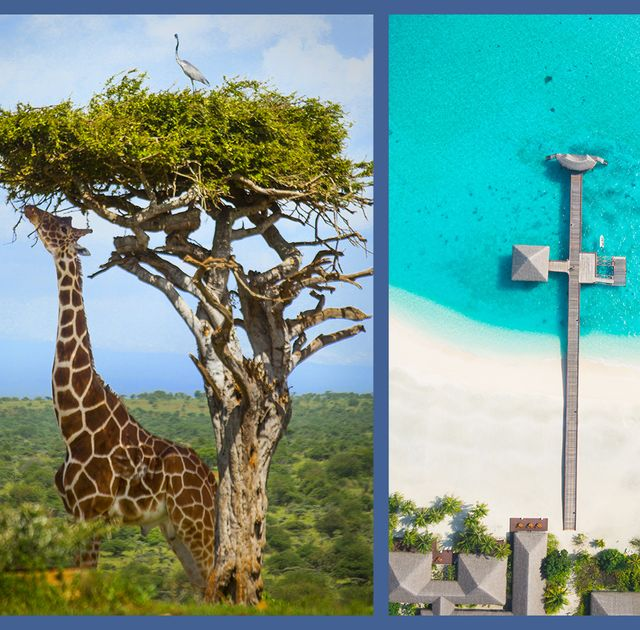 Tree, Street light, Architecture, Adaptation, Tourism, Plant, Historic site, Tourist attraction, Cross, Symbol,
