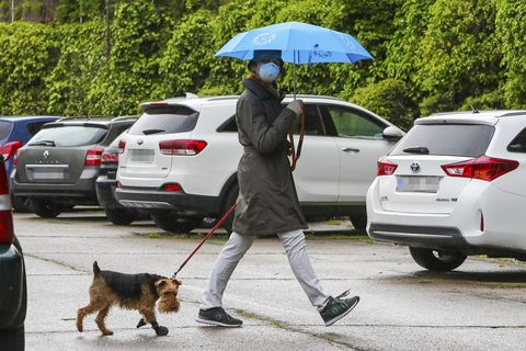 famosos paseando a sus perros