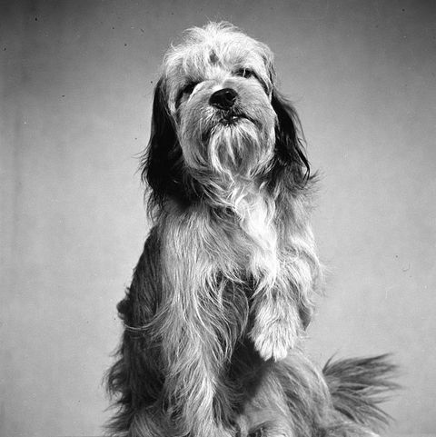 "Famous Dogs from Movies - Benji in ""Benji"""