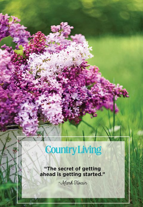 purple flowers in a bucket and a quote from mark twin