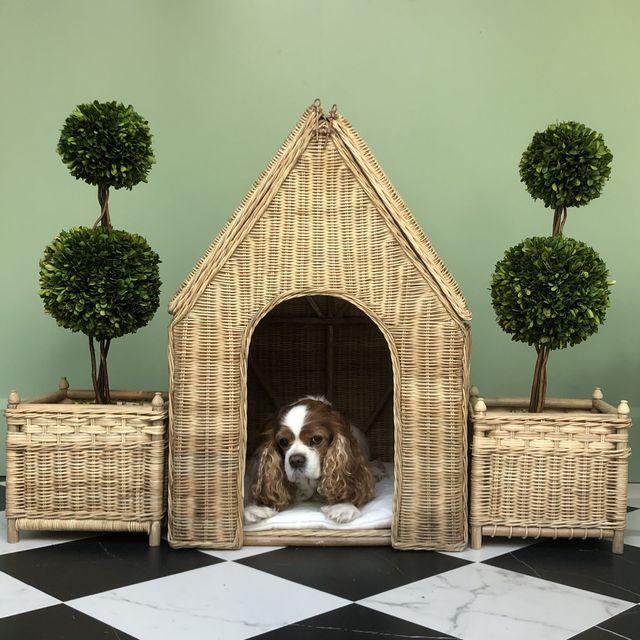 fancy dog houses