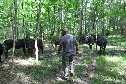 Black farmers are losing their land