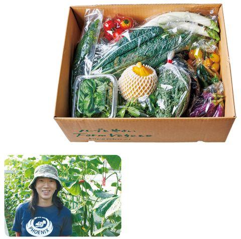 ファームベジコ 旬の野菜とハーブのセット
