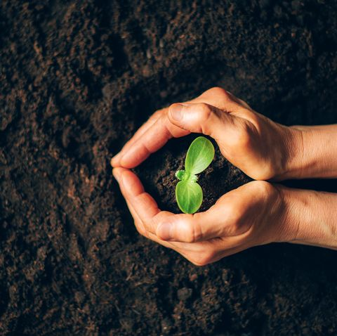 farmer hand holding young plant