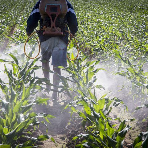 a farmer spraying corn in mexico