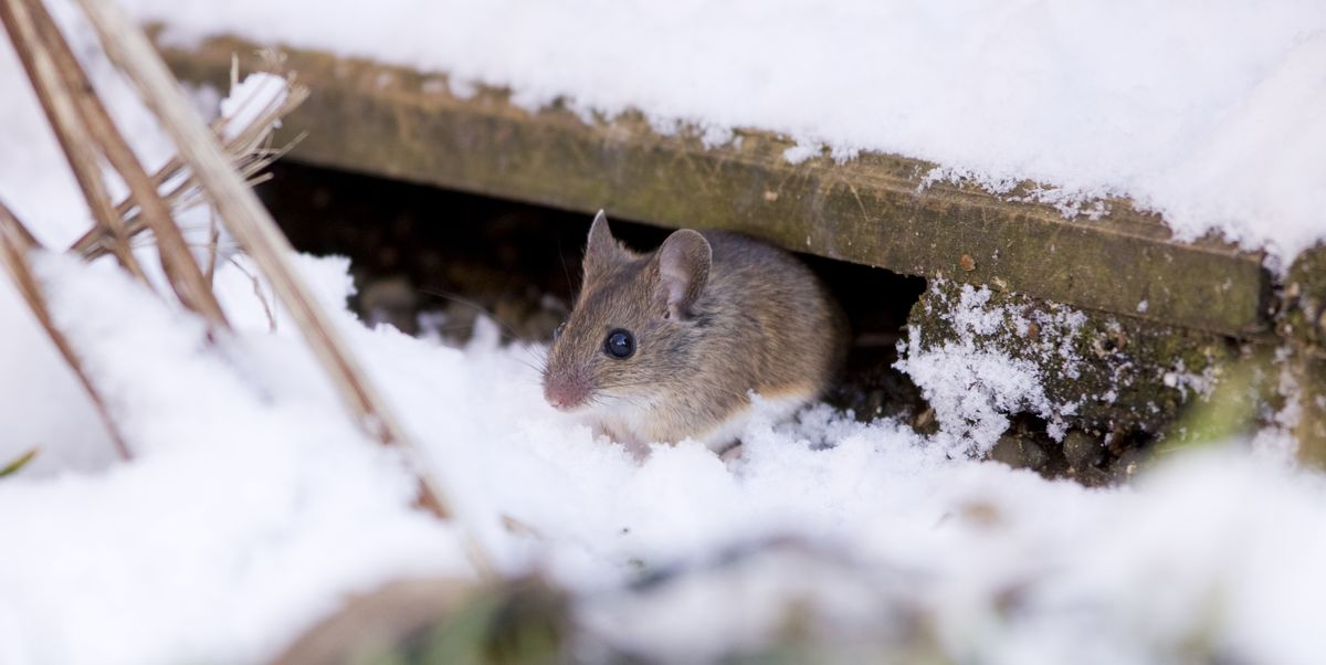 Winter 2019-2020 Could Result in Increased Pest Populations