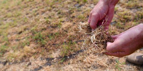 Dray grass, farming