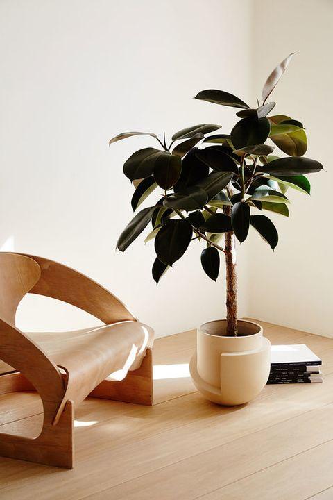 indoor tree for sale