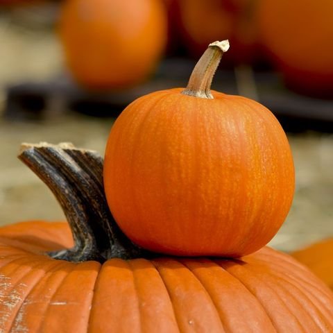 fascinating halloween facts pumpkins