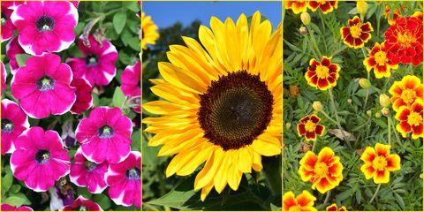 fastest growing flowers