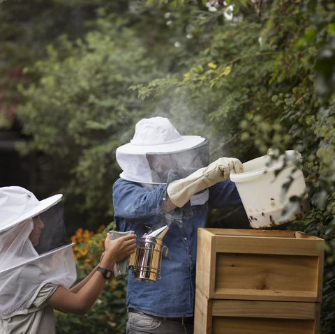 father and son practicing beekeeping in a domestic back garden