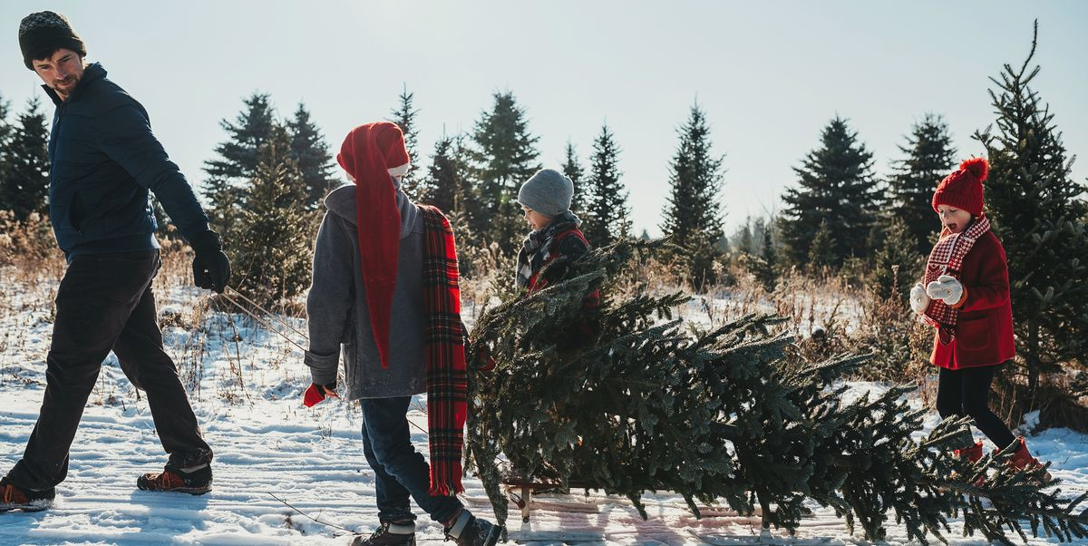 The Surprising Histories Behind Your Favorite Christmas Symbols and Traditions
