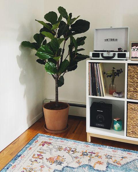 faux fiddle leaf fig tree in corner of living room