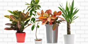 Lijst met fijne kamerplanten - Dit zijn de favoriete kamerplanten van team ELLE Decoration