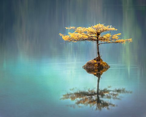 Nature, Reflection, Tree, Natural landscape, Sky, Leaf, Water, Plant, Still life photography, Calm,