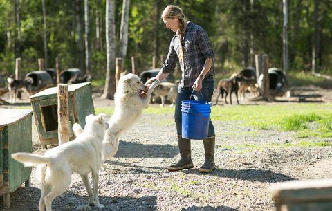 hand feeding dog