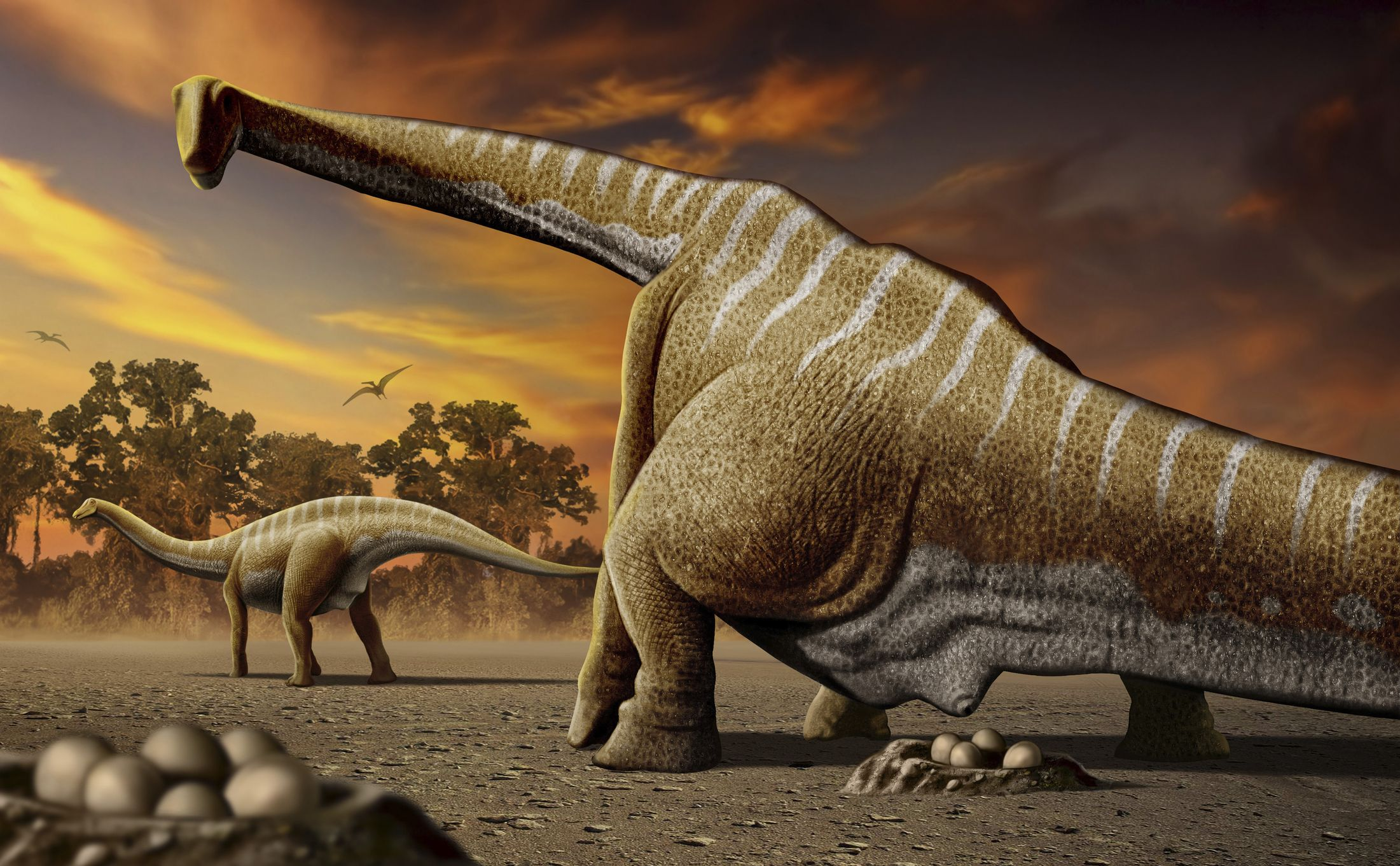 Were Dinosaurs Warm-Blooded? Ancient Eggshells Point to 'Yes'