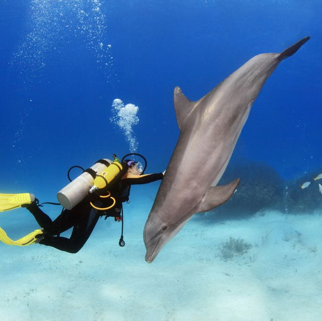 female diver plays with dolphin