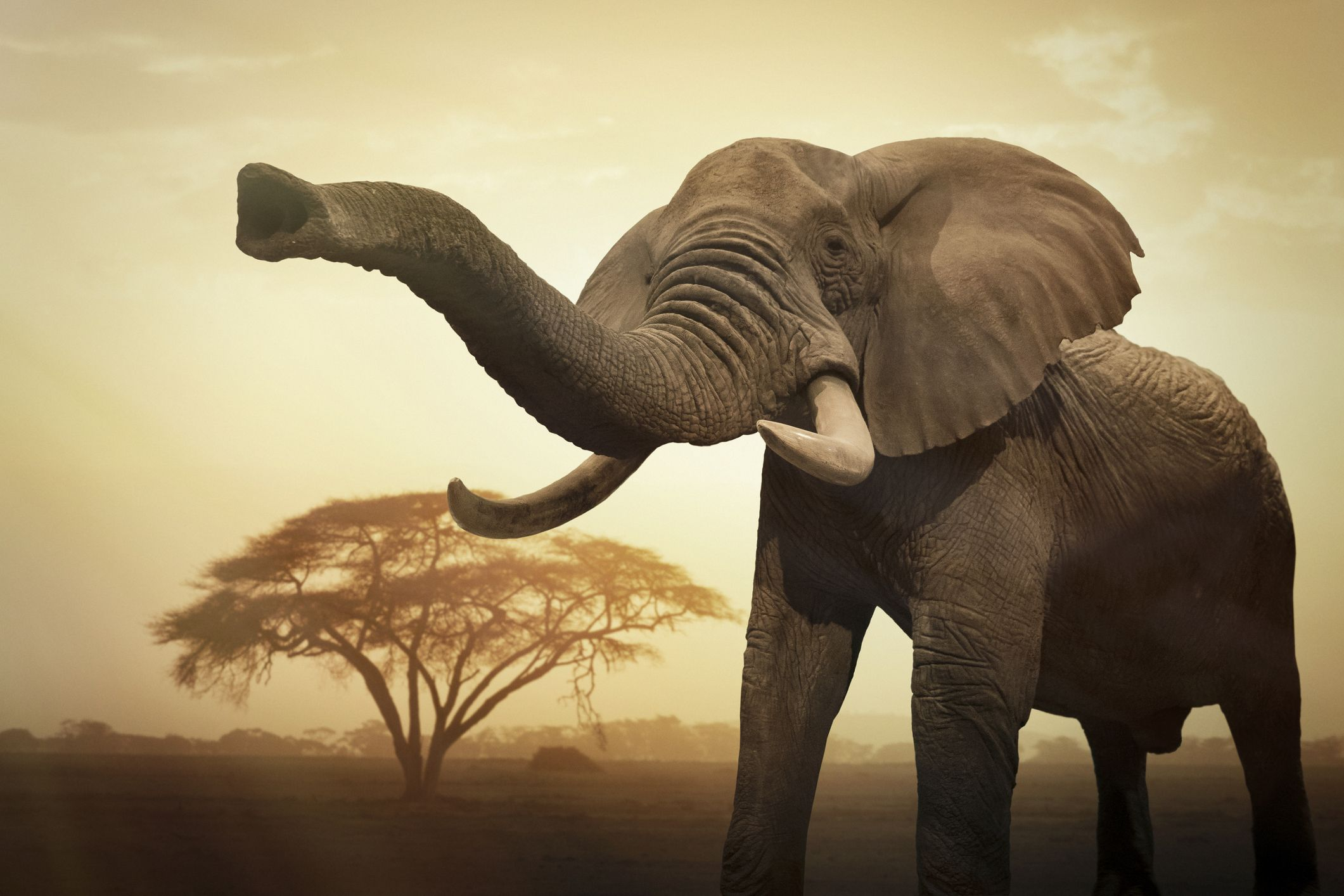 Elephants are the smartest land animals out there.