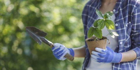 meilleurs gants de jardinage