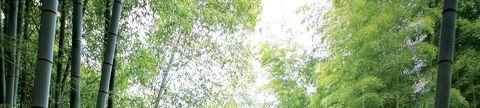 Green, Tree, Vegetation, Branch, Leaf, Plant, Woody plant, Sunlight, Grass, Forest,