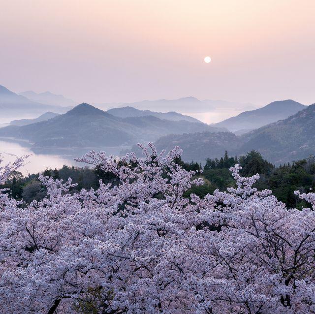 愛媛県伯方島 開山公園