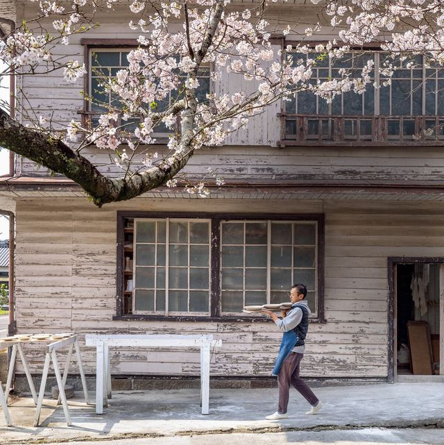 桜の花見 臼杵焼研究所