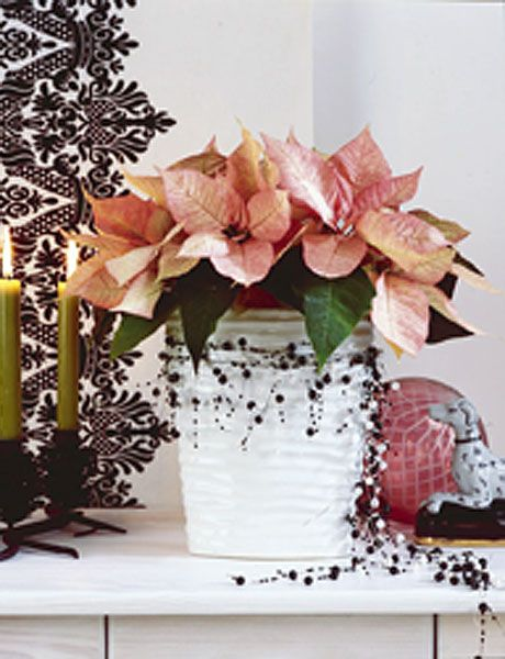 Flower, Pink, Plant, Cut flowers, Flowerpot, Leaf, Spring, Anthurium, Petal, Floral design,