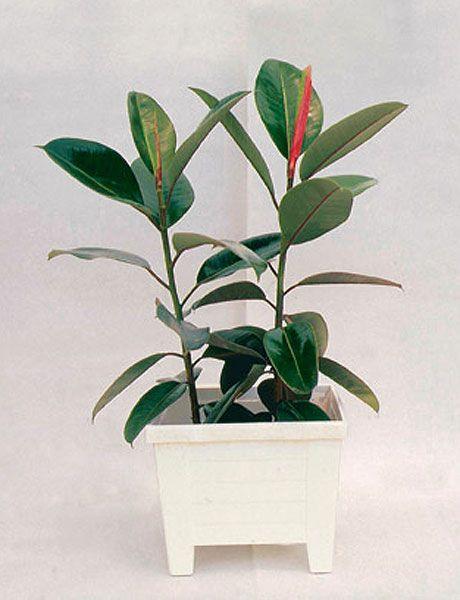 Flowerpot, Leaf, Botany, Plant stem, Terrestrial plant, Interior design, Houseplant, Flowering plant, Annual plant, Herbaceous plant,