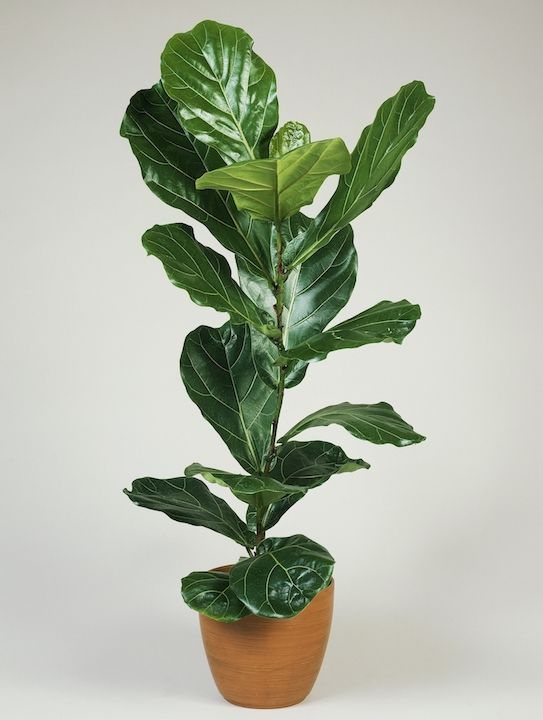 15 best indoor plants for apartments low maintenance plants for