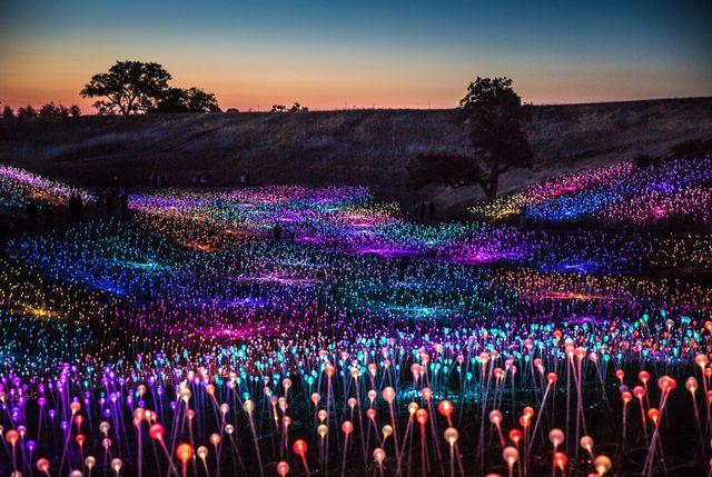 field of light at sensorio in california