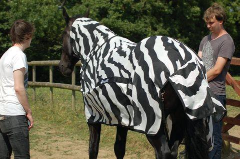 Mammal, Zebra, Wildlife, Horse, Terrestrial animal, Mane, Organism, Art,