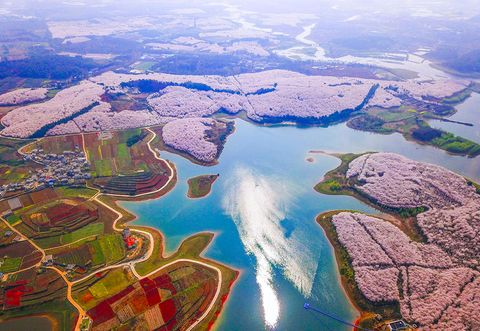 the jaw dropping drone footage of china s cherry blossoms
