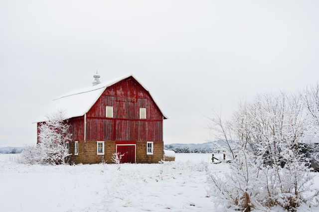 fresh snow surrounds an old red barn in rural wisconsin