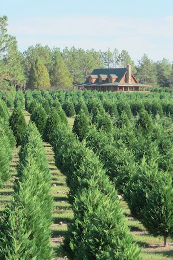 alabama christmas tree farms near me