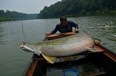 DOUNIAMAG-BRAZIL-AMAZON-FISHING