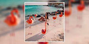 Flamingo beach - Flamingo beach Aruba