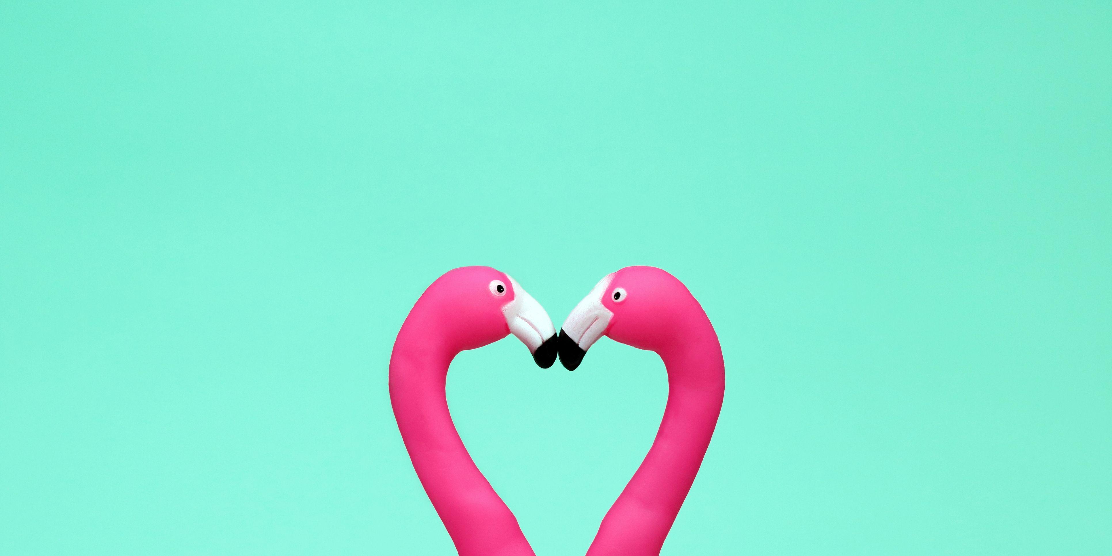 flamingo love heart friends kiss