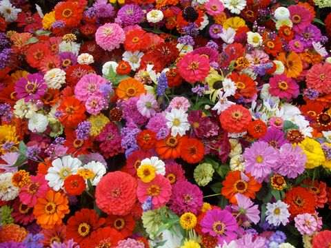 Flower, Plant, Flowering plant, Pink, Floral design, Petal, Spring, Wildflower, Floristry, Annual plant,