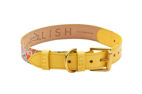 Collar, Dog collar, Belt, Fashion accessory, Yellow, Buckle, Bracelet, Jewellery, Beige, Material property,