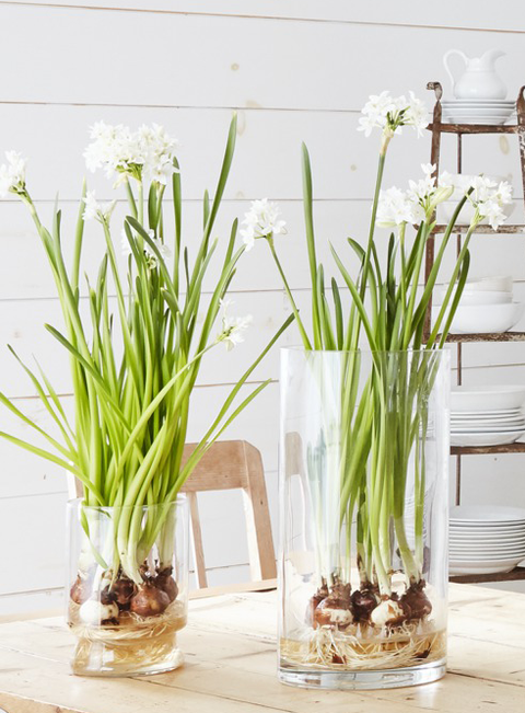 flower arrangements bulbs