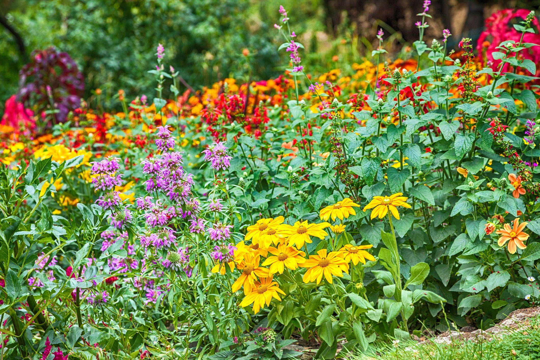 Gardening In June Garden Jobs In June Summer Garden Ideas