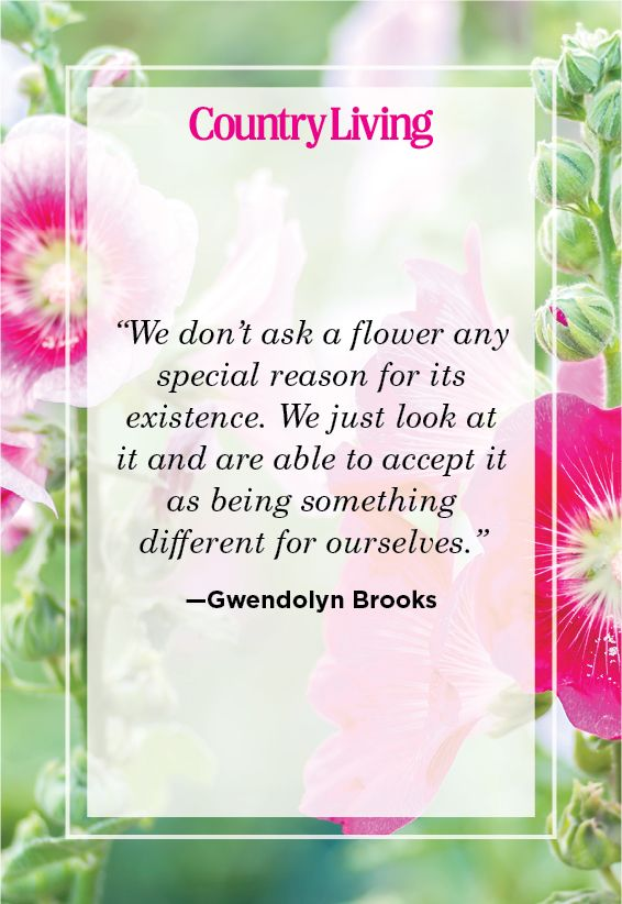 45 Inspirational Flower Quotes Cute Flower Sayings About Life And Love