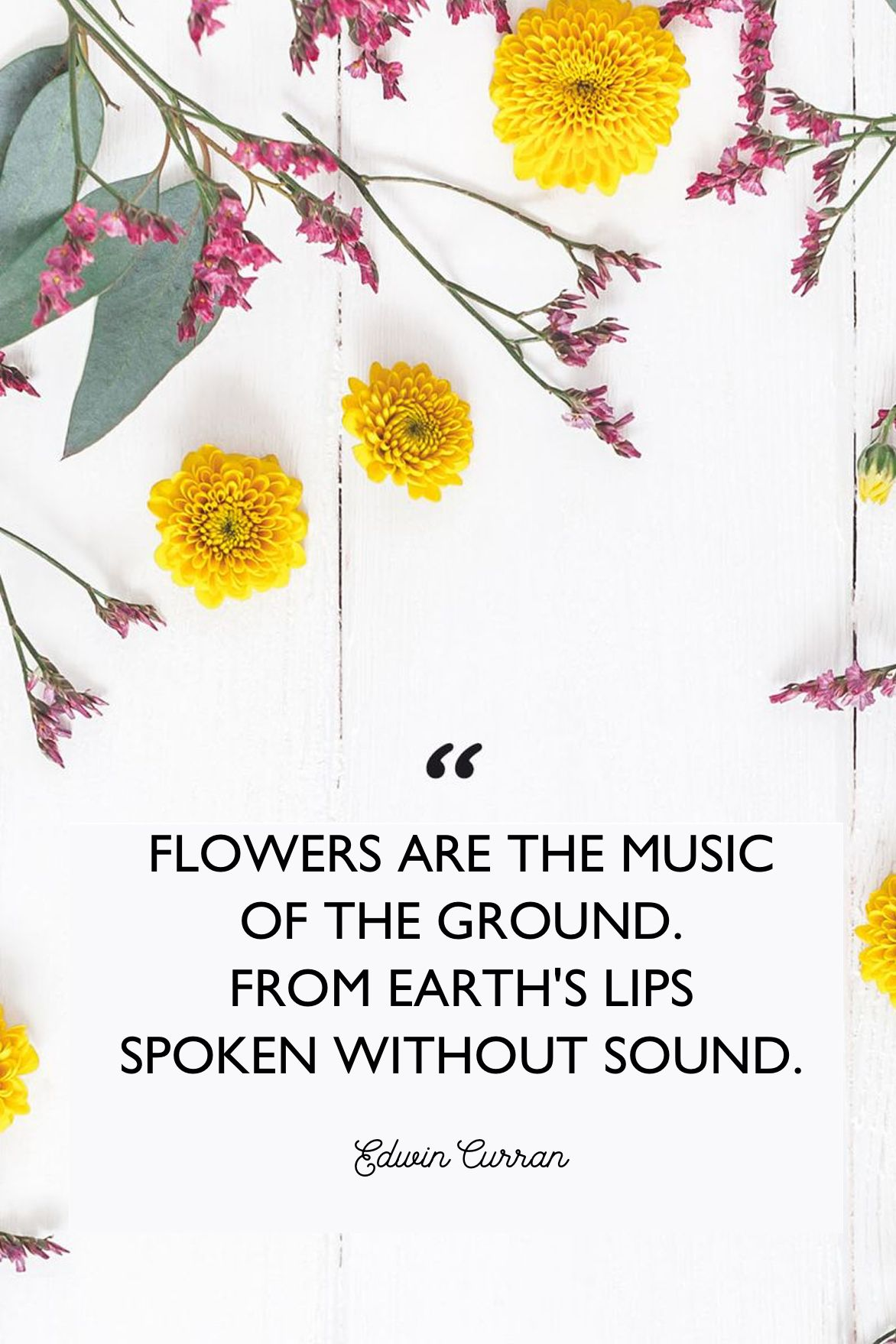 5 Inspirational Flower Quotes - Cute Flower Sayings About Life
