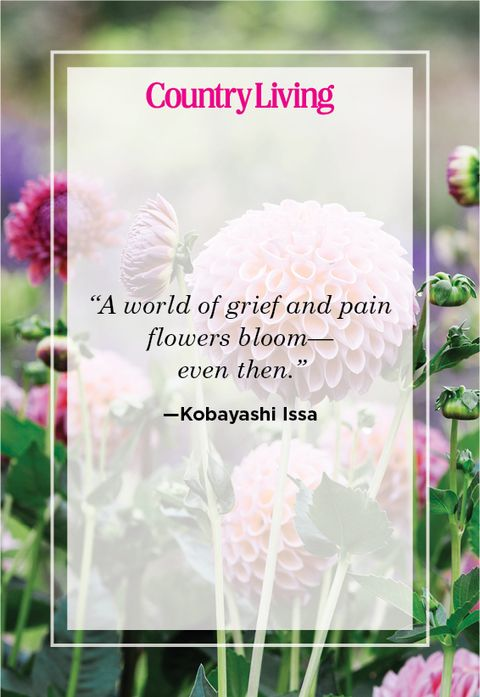 kobayashi issa quote about flowers